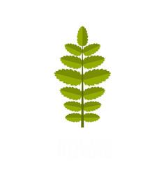 rowan leaf icon flat style vector image