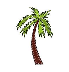 scribble color palm cartoon vector image