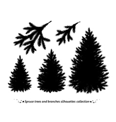 Spruce trees silhouettes vector