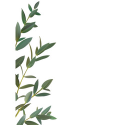 Thyme leaf green frame isolated medicinal vector