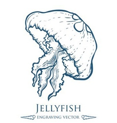 Jellyfish Drawing vector image