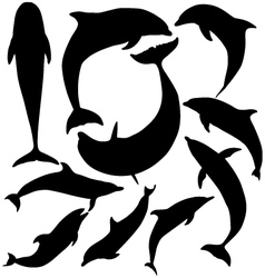 Dolphin Silhouette vector image vector image