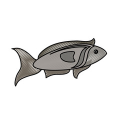 fish seafood isolated vector image vector image