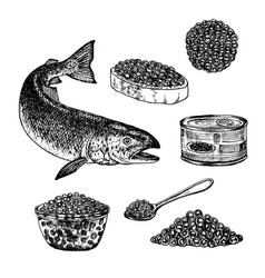 hand drawn set of red caviar vector image