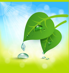 background with leaves and dew vector image