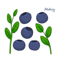 A set of blueberry elements sprigs bilberries vector