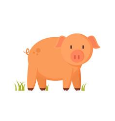 Farm animal standing piglet cartoon vector