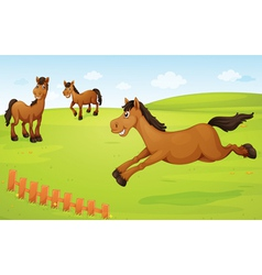 horses on meadow vector image