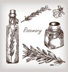 Rosemary oil set vector