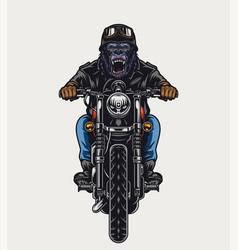 Cruel gorilla head biker vector