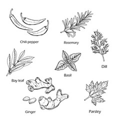 hand drawn spice and vegetable collection vector image