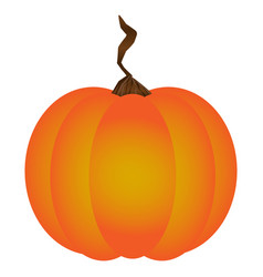 isolated pumpkin vector image