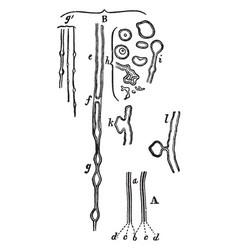 Nerve tubules vintage vector