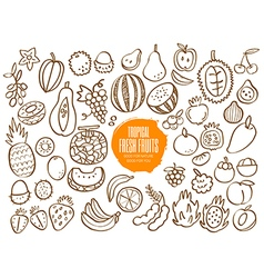 Set of hand drawn tropical fruit doodles vector image