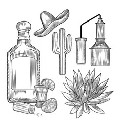 Set tequila shot glass and bottle tequila vector