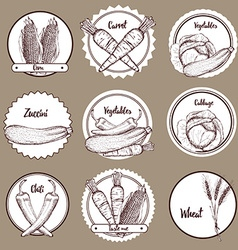 Sketch set of vegetable logotypes vector image