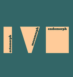 Body types ectomorph mesomorph and endomorph vector