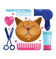 Cat grooming blow-dry cut and comb vector