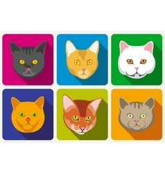 Cat portraits collection vector image