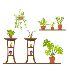 green house plants in pots vector image
