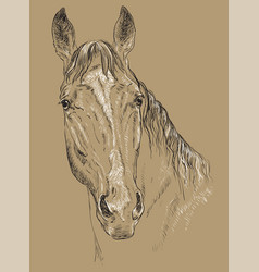 horse portrait-5 on brown background vector image