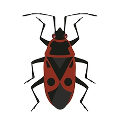 Red soldier bug vector