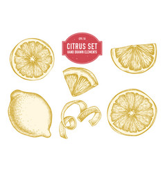 collection of hand drawn citrus vector image