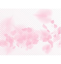 pink sakura flower falling petals vector image