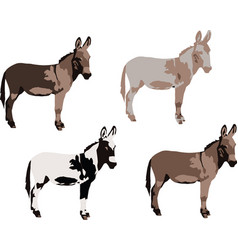 Series donkeys various colors vector