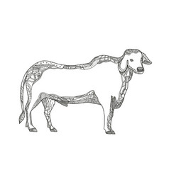 Brahman bull side doodle side vector