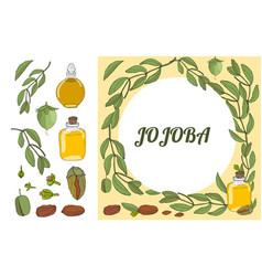 color set of hand drawnjojoba elements vector image
