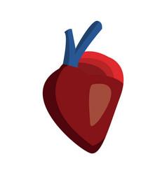 Heart of human body health medicine cardiology vector