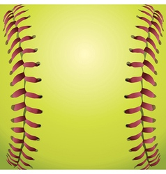 closeup a softball vector image
