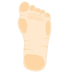 Foot of the person vector image