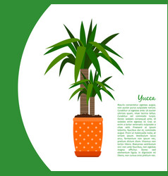yucca plant in pot banner vector image vector image