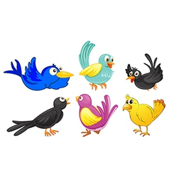 Birds with different colors vector image vector image