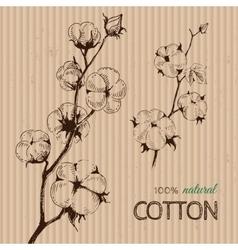 Hand drawn cotton plants on cardboard vector