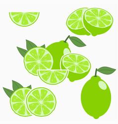 lime citrus fruit vector image