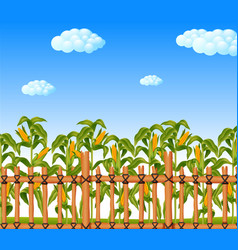 young green corn field in agricultural garden vector image
