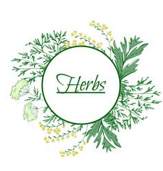 aromatic medicinal herbs grand wormwood green vector image