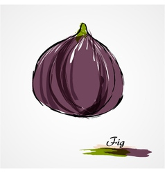 fig whole vector image vector image