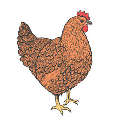 sketch of hen line art style standing chicken vector image