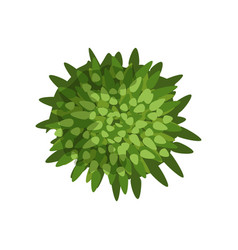 Green plant landscape design element top view vector