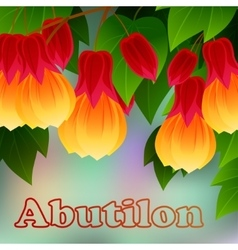 Red vein chinese lantern abutilon pictum with vector