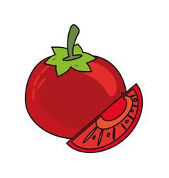 Tomato vegetable food fresh vector