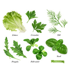 Greens and spices realistic set lettuce coriander vector