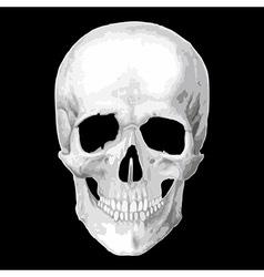 Human skull model object vector