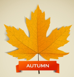 Maple leave with autumn banner vector