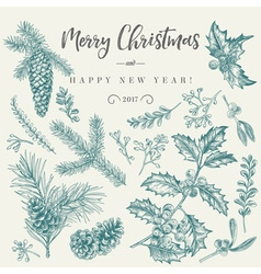 Set with Christmas plants Botanical Branch vector image