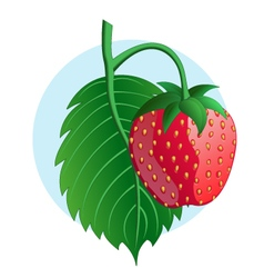 Strawberry on blue background vector image